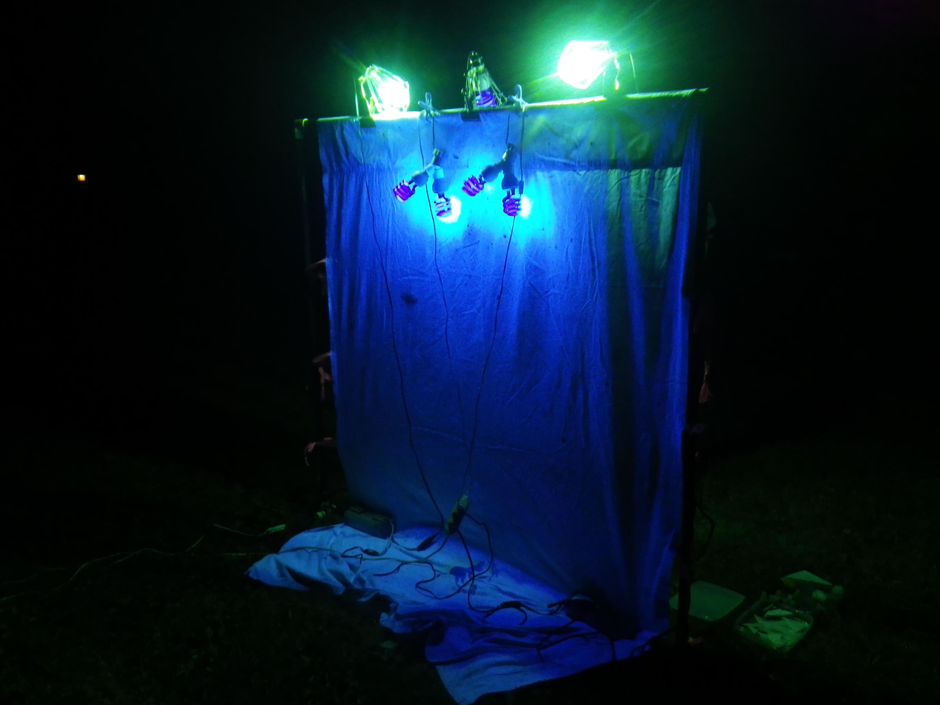 灯火採集の風景